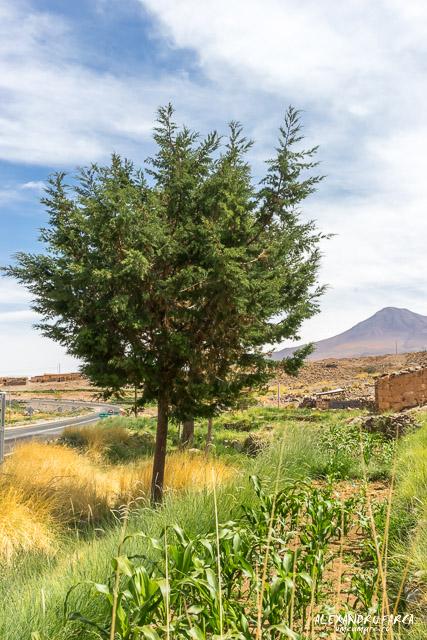 Atacama-02043