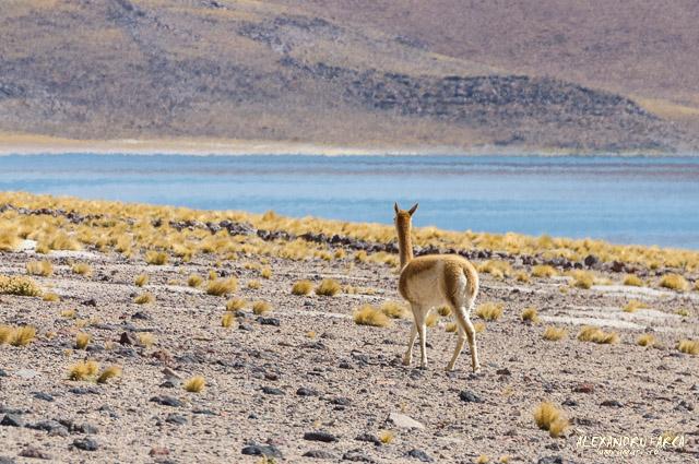 Atacama-7702