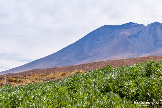 Atacama-7728