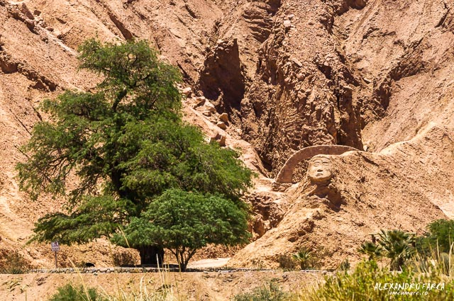 Atacama_pukara-7926