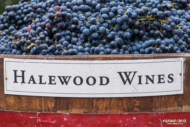 Halewood-0505