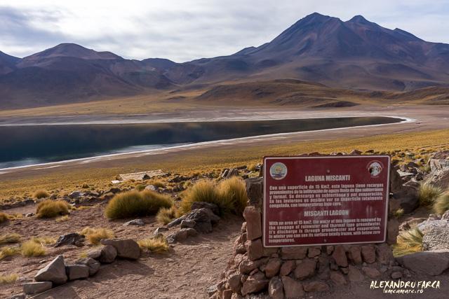 Laguna Miscanti - Atacama-01972