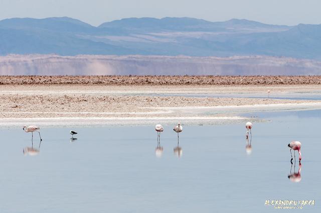 Salar_de_Atacama-7866