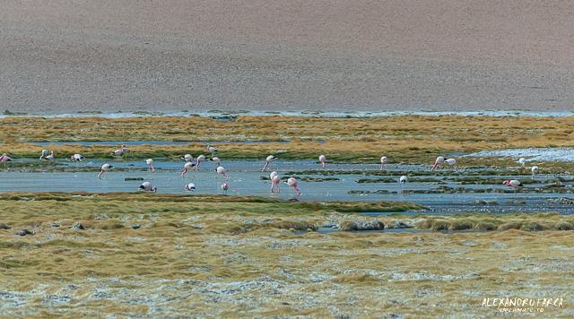 Atacama_Salar de Tara-8272