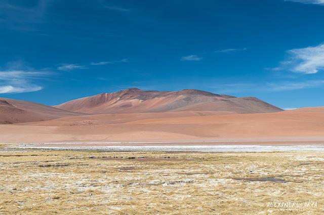 Atacama_Salar de Tara-8279