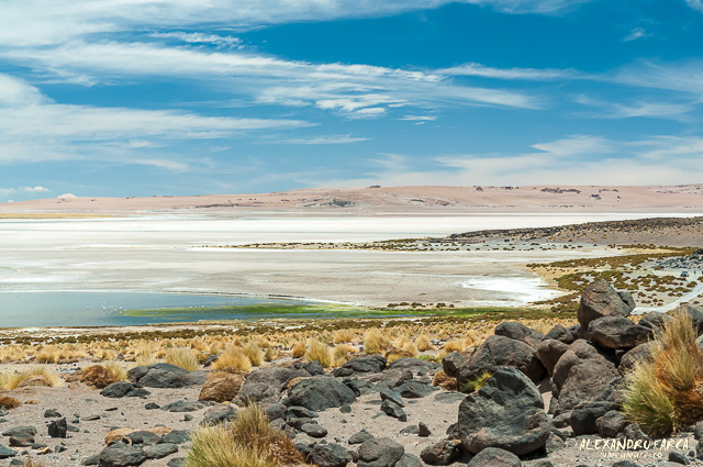 Atacama_Salar de Tara-8641