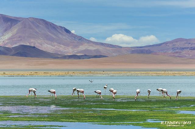 Atacama_Salar de Tara-8692
