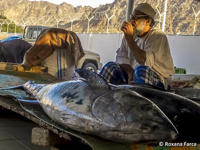 Oman. Piața de pește din Muscat.