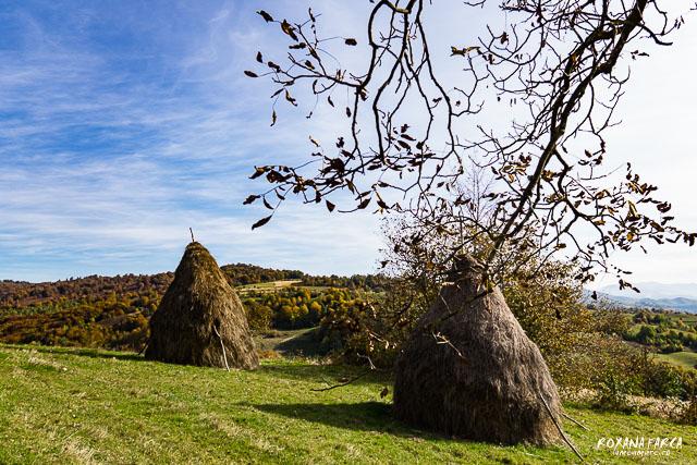 Traditional_Casa_Padurea_Craiului-9538