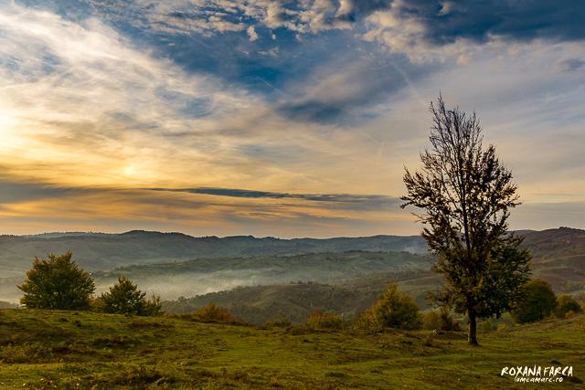 Valea_Rosie_Padurea_Craiului-9619