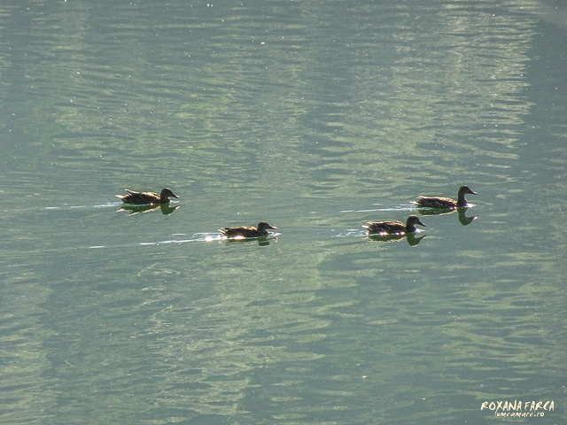Dolomiti-Alleghe-02853