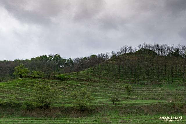 Dealuri terasate Richiș - Biertan