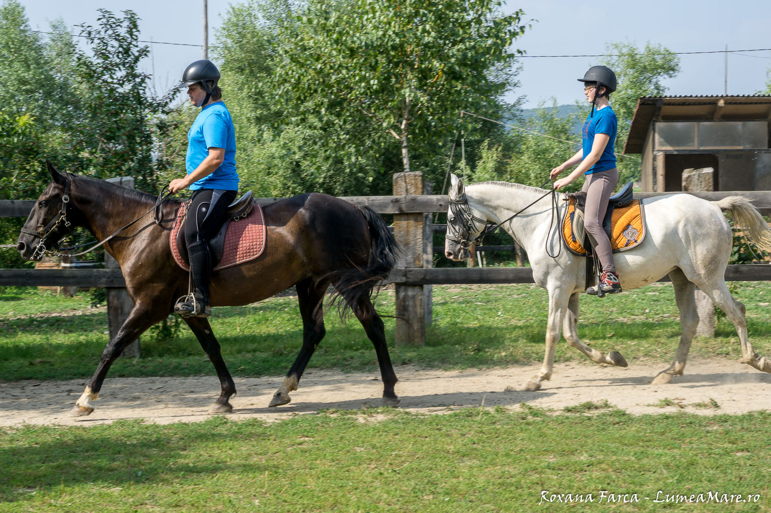 caii-lupilor-7422