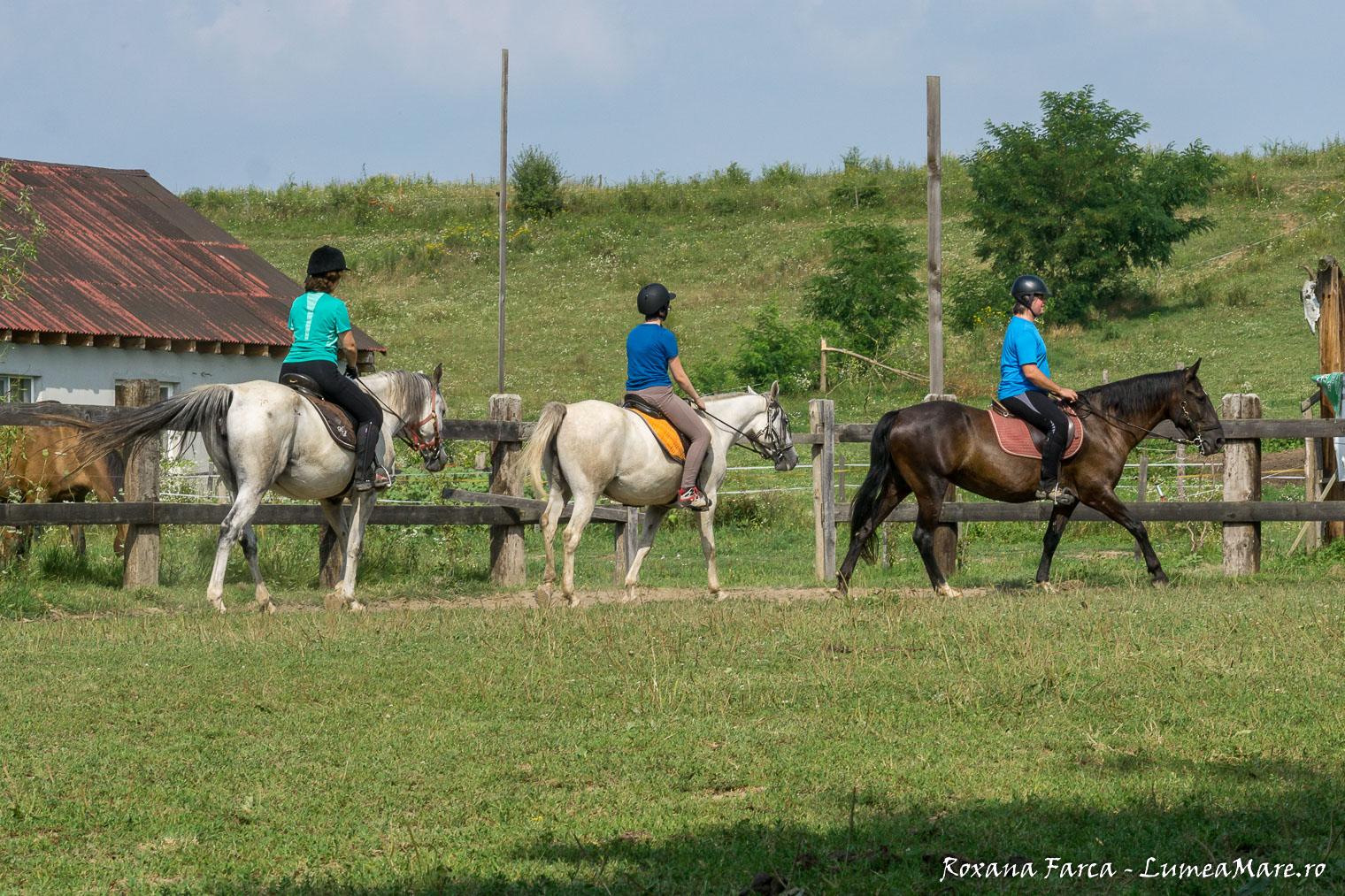 caii-lupilor-7451