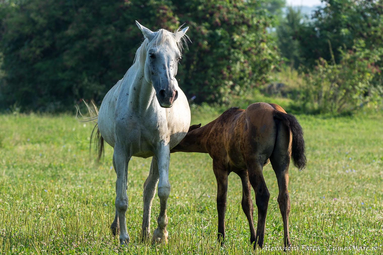caii-lupilor-9164