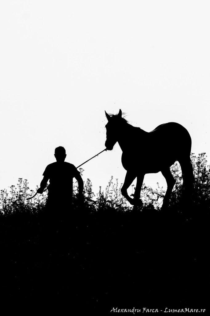 caii-lupilor-9187