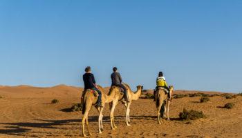 Plimbare cu cămilele în Wahiba Sands