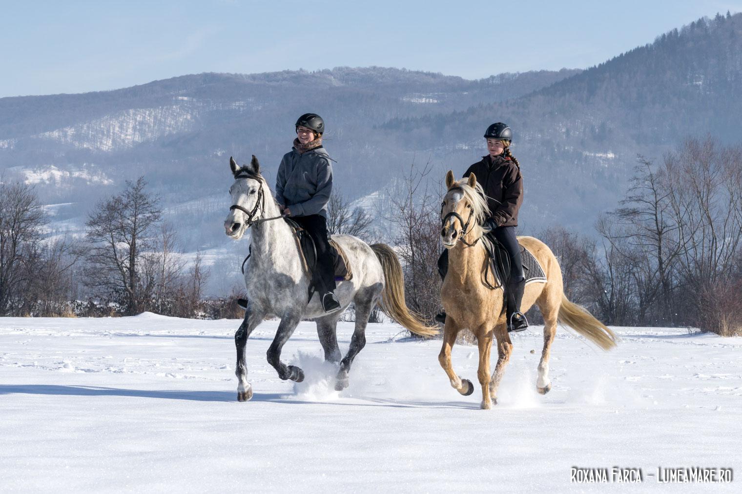 Călărie iarna, la Equus Silvania