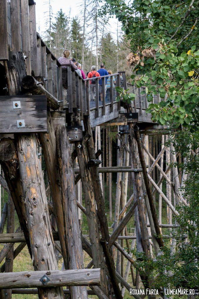 Pasarelă în Parcul Natural Vânători Neamț