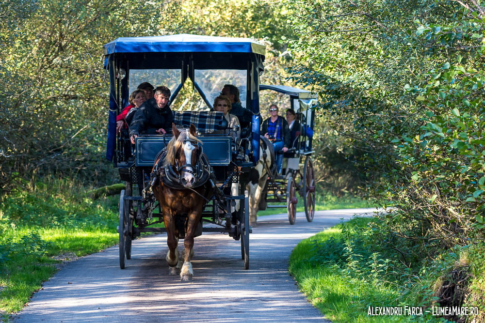 Trasurile din parcul din Killarney