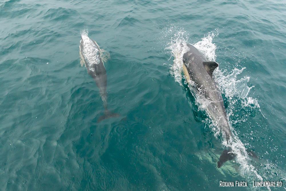 Delfinii, o companie jucăușă pe ocean