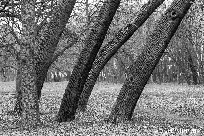 Parcul Herăstrău iarna