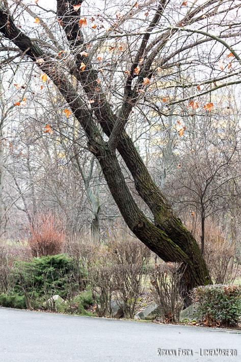 Iarna în Parcul Plumbuita