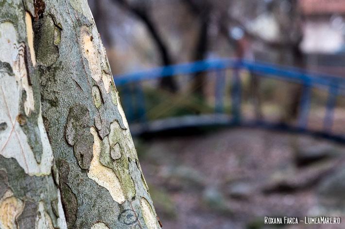 Mesteceni în Parcul Plumbuita