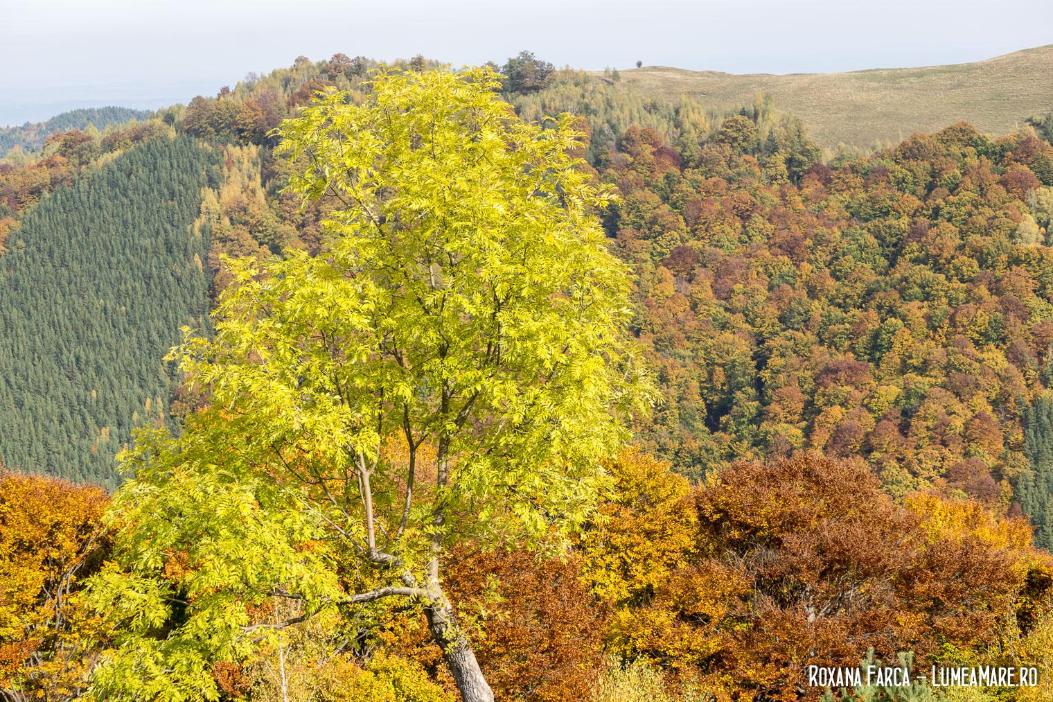 Mărginimea Sibiului, drumul spre Păltiniș