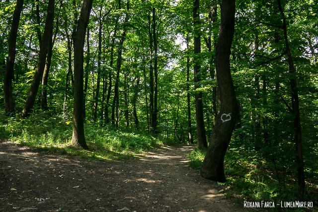 Pădurea Vieneză