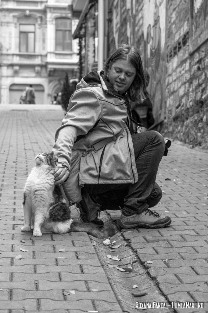 Pisicile din Istanbul
