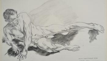 Desen anatomie Roxana Farca