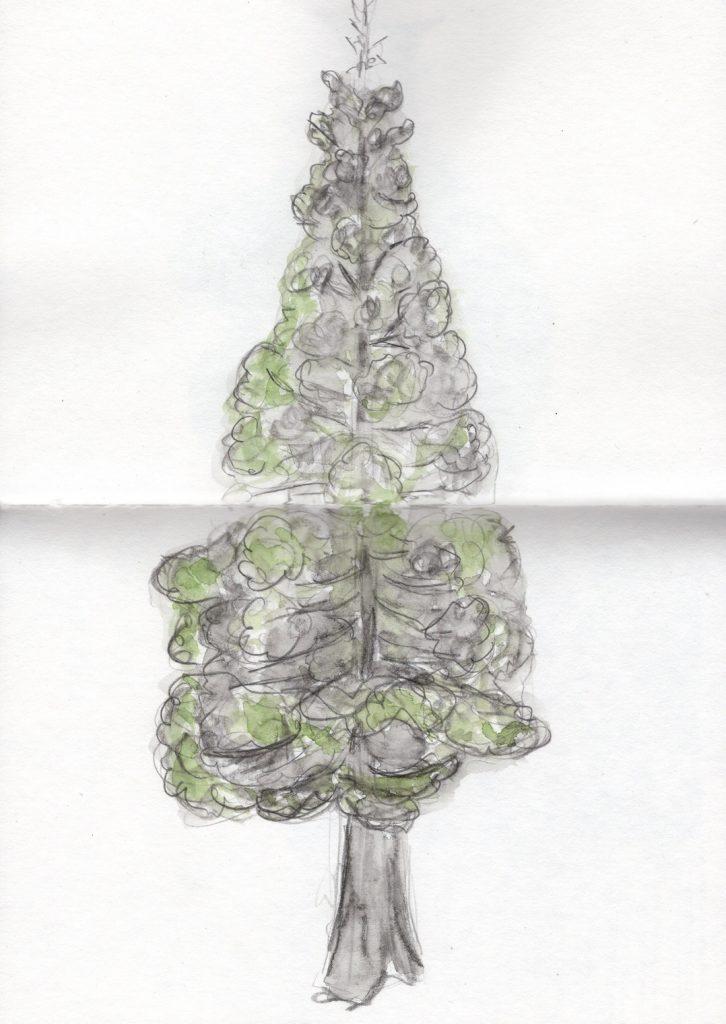 Copac din Lainzer Tiergarten. Caiet de schițe.